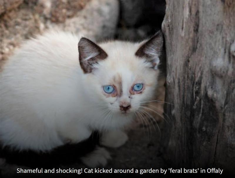 Feral brats kicked a cat around a garden