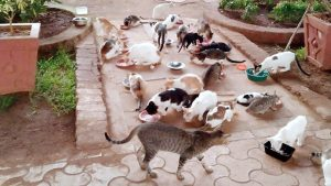 Feral cats of park in Mumbai - Maheshwari Udyan