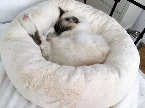 Fleece commercially made cat bed