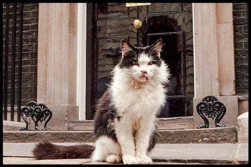 HUMPHREY THE CAT