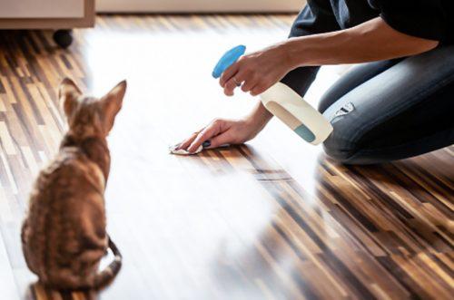 Indoor cat spraying - clean up