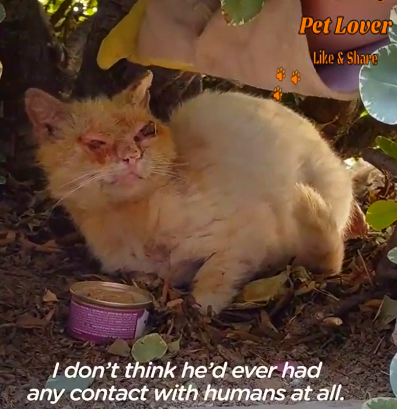Investing time and resources to rescuing and rehabilitating a stray cat