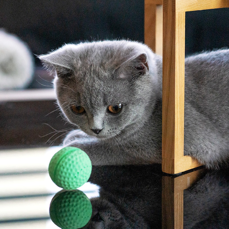 Kitten eyes up a ball which is going to be a pretend fish to throw into the air