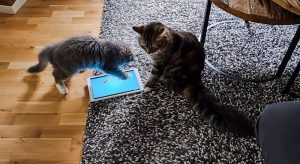 Kitten playing a cat game on a tablet computer