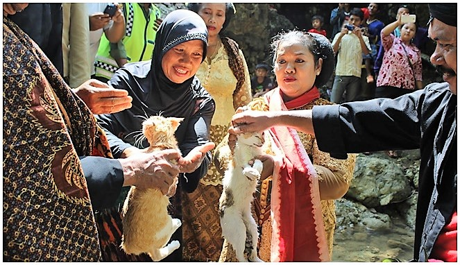 Manten Kucing rain making ritual of East Java