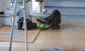 My cat using an interactive feeder