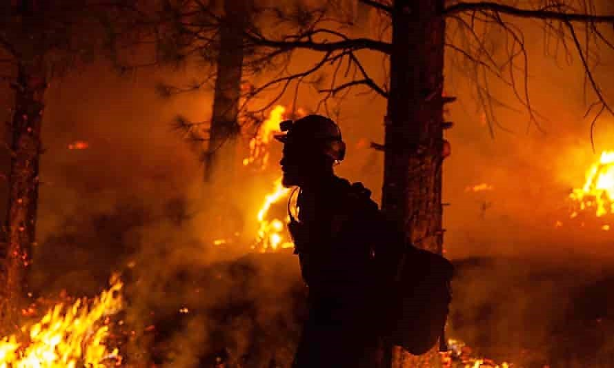 Oregon Bootleg fire. What is happening to the domestic and wild animals?