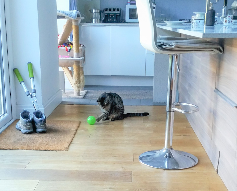 Picture of a tabby cat using an interactive cat feeder