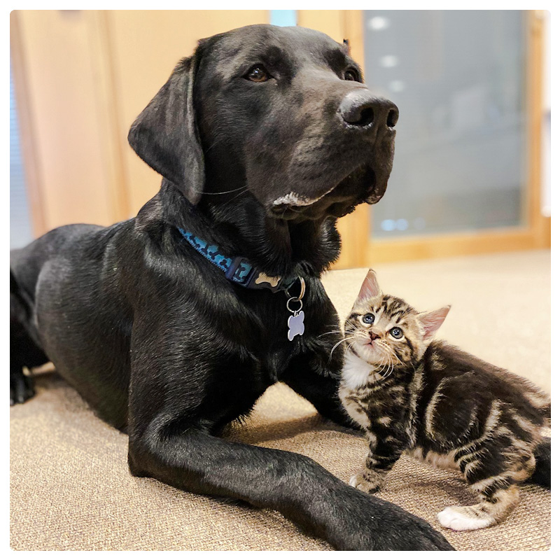 Picture of rescue dog parenting and nurturing abandoned and rescued kittens