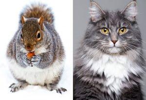 Squirrel versus cat on speed