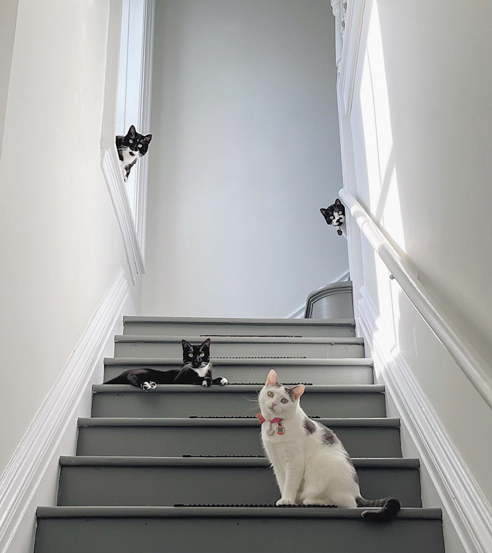 Picture of a stairway to heaven with a 4-cat guard of honour