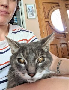 The eyes of a 21-year-old cat with iris melanosis - iris freckles
