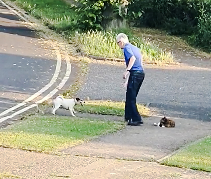 Very old man struggles to protect his cat on the sidewalk from a marauding little dog