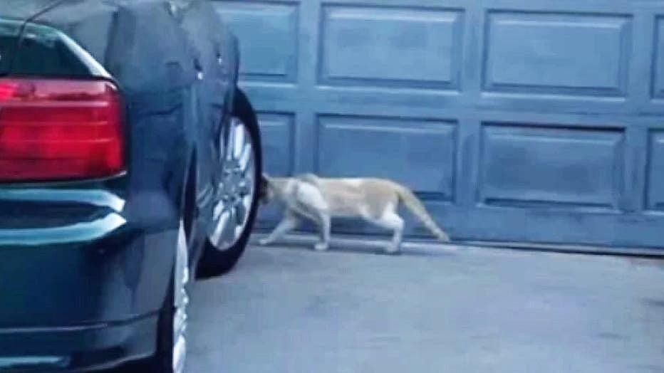 Feral cats of Compton, California