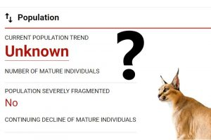 Caracal population is unknown