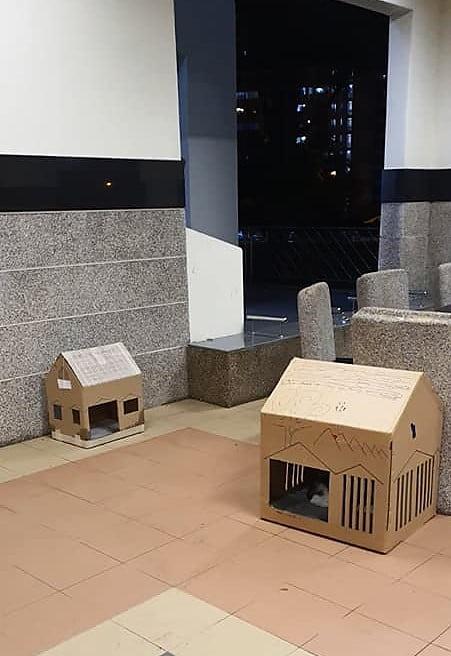 Cardboard cat homes for HDB community cats