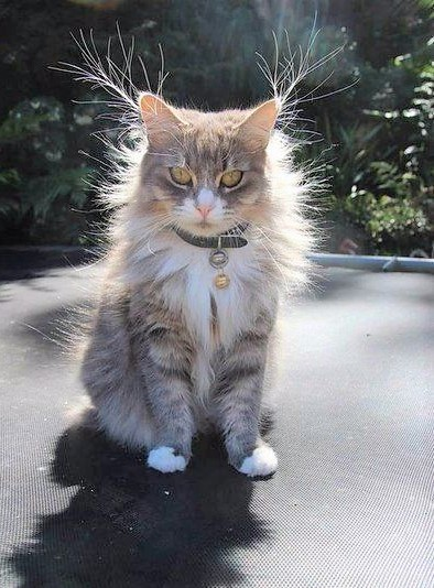 Cat looking like a plasma globe