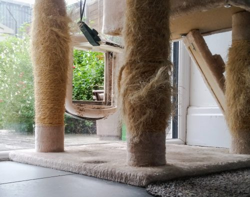 Cat scratching near boundaries of their home range