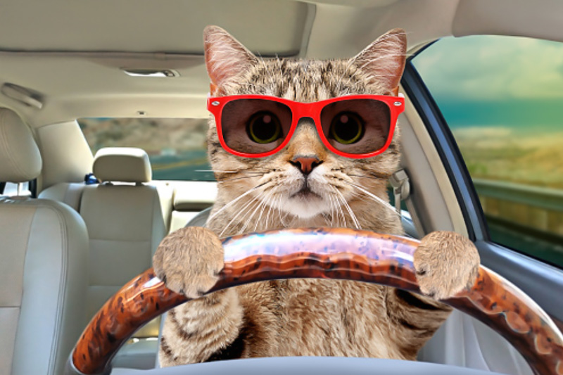 Cats are going on staycation holidays in the UK
