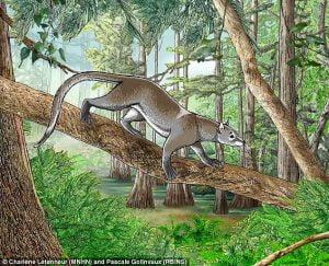 Common ancestor of modern cats and dogs: Dormaalocyon latouri