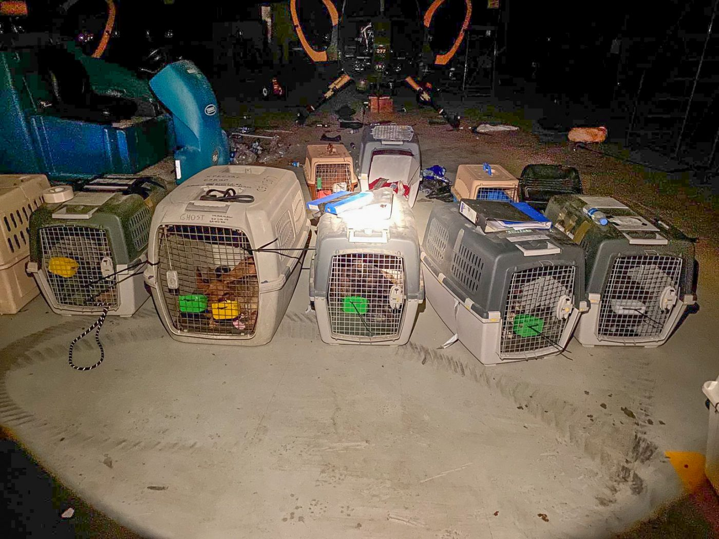 American contractor working dogs abandoned in carriers in Afghanistan on the mass evacuation of people