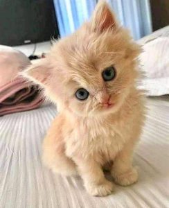 Curious and seriously cute kitten