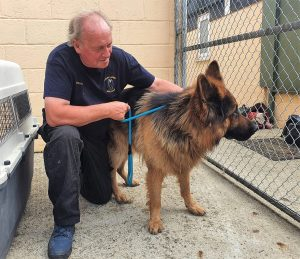 Dog rescued from Kabul by Nowzad and evacuated to the UK