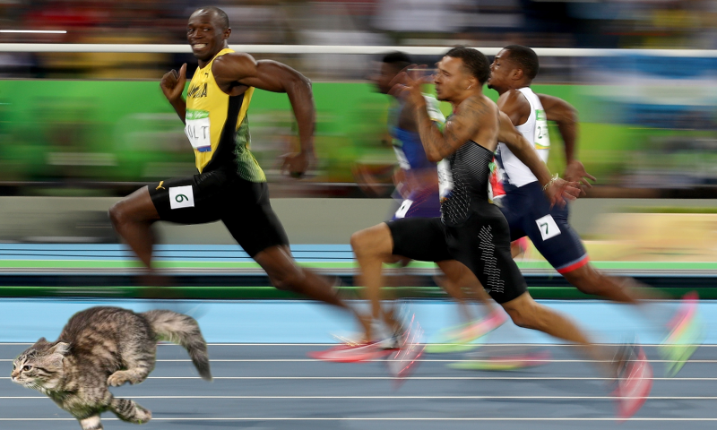 Domestic cat is faster than humans and faster than Usain Bolt