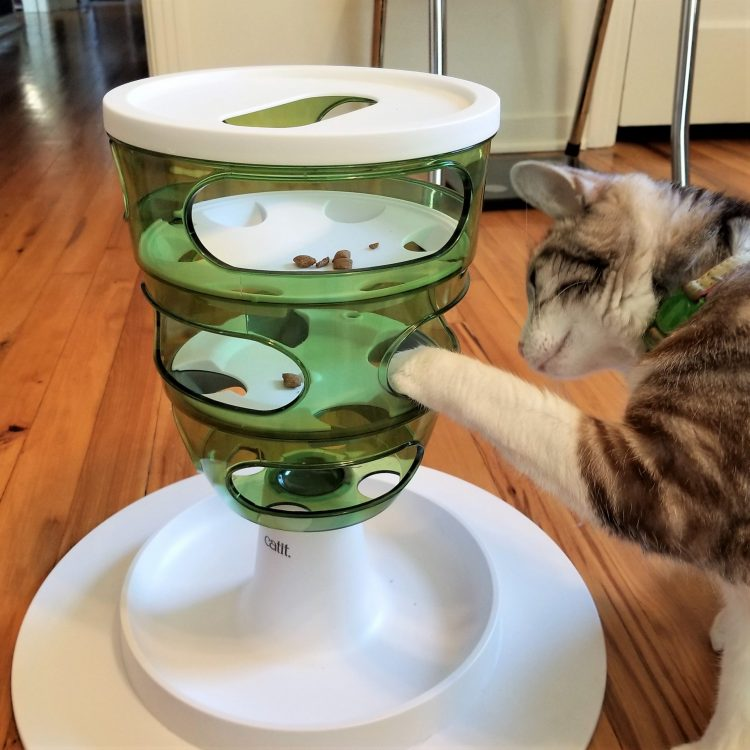 Domestic cat uses an interactive puzzle feeder