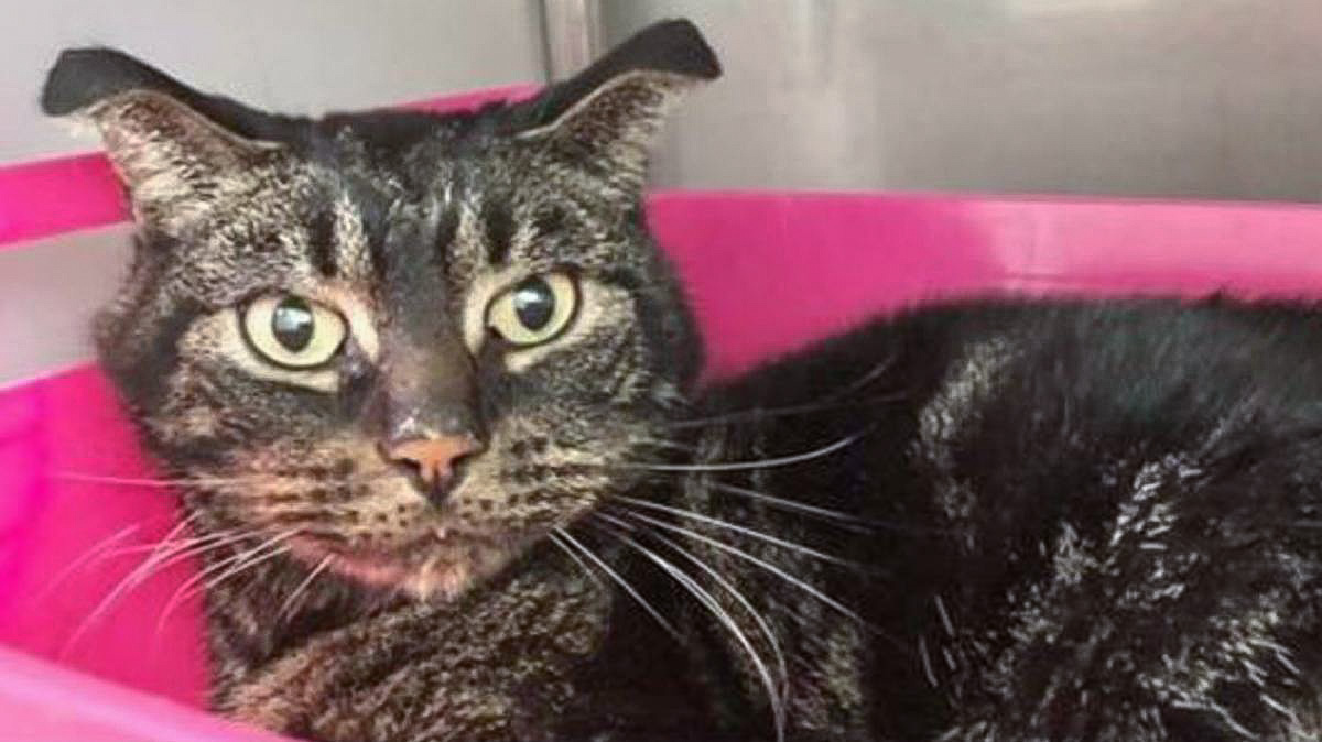 Finn, the tabby cat who is said to have survived for 52 days on paper and a leaky tap