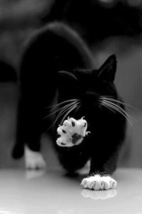 Good photo of a cat's claws