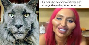 Humans breed cats to extreme and change themselves to an extreme too