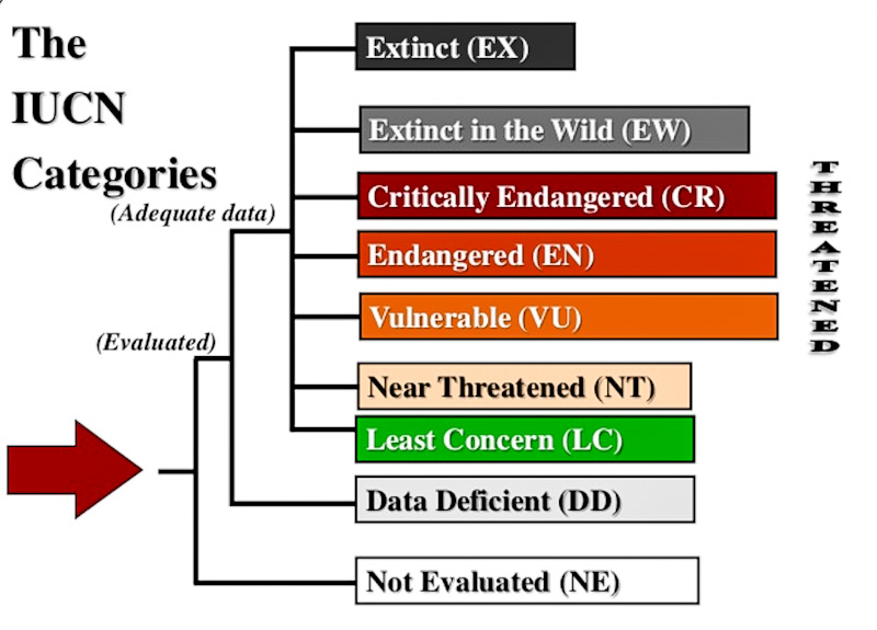 IUCN Red List categorisation