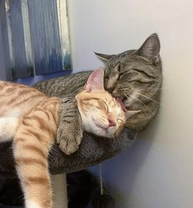 It is called cat chemistry