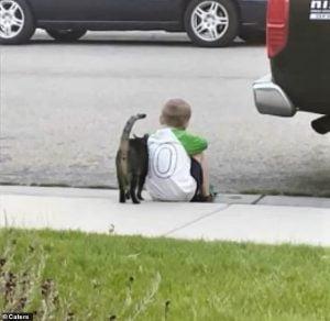 Neighbour's cat consoles boy sitting on the sidewalk in Boise, Idaho, USA