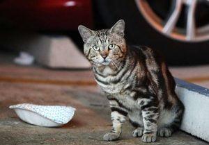 Nova Southeastern University community cat is fed