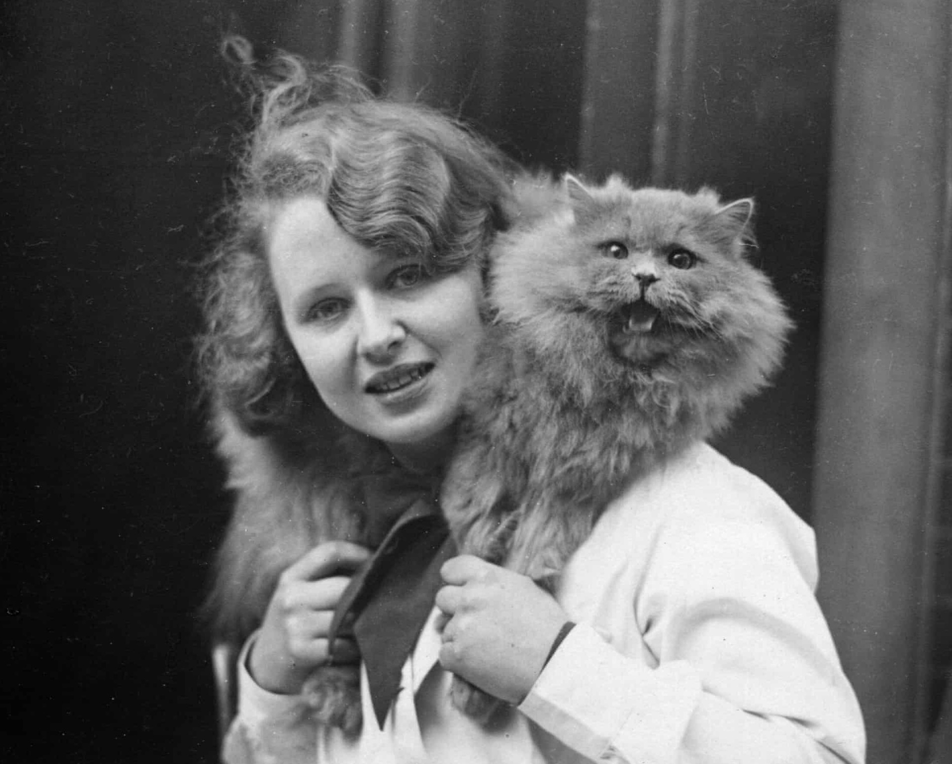 Patrick of Allington, a blue Persian wins first prize at a cat show at Holy Trinity Hall in central London in 1933