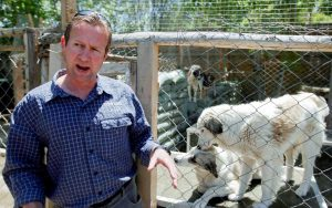 Pen Farthing and dogs at Nowzad