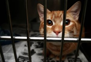 Retrograde EU wants to animal test for cosmetics