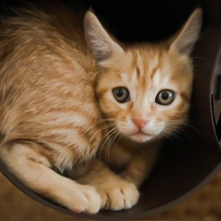 Timid cat