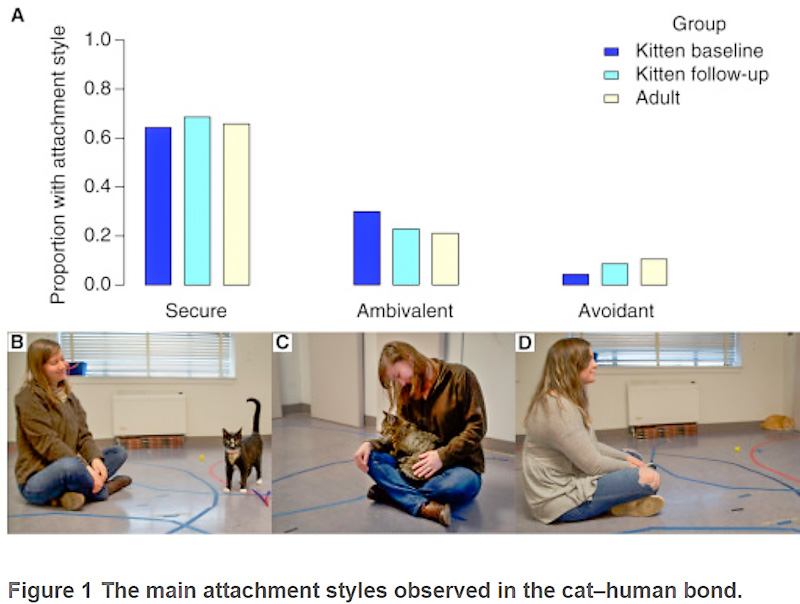 Working out the degree of attachment cats have towards their human caregivers