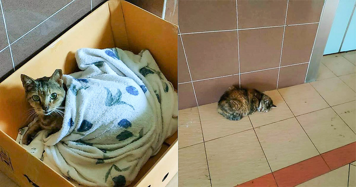 Singapore community cat: a resident of HDB block threw away cat's cardboard home and blanket