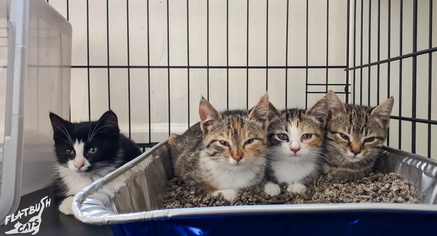 Socialising four kittens