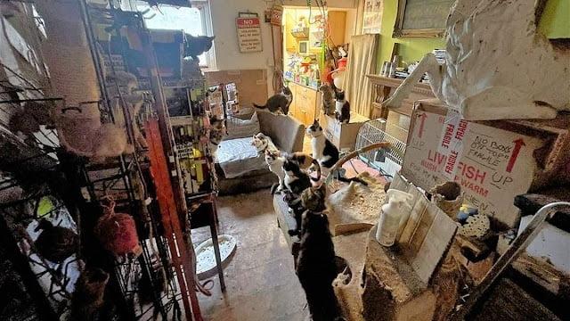 Inside Catmando's home