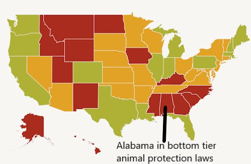 Alabama in the bottom tier of animal protection laws