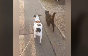 Benji and black cat friend