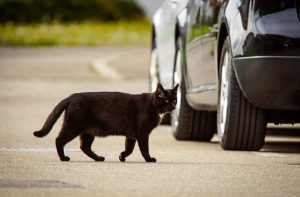 Cat crosses the road