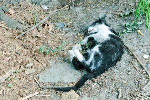 Cat killed on the road