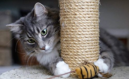 Cat playing using claws