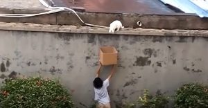 China - kind boy rescues cat from high wall